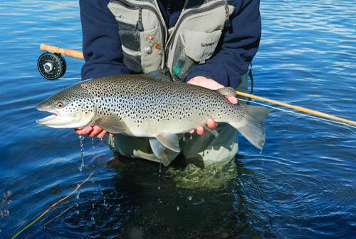лосось хорошая рыбалка