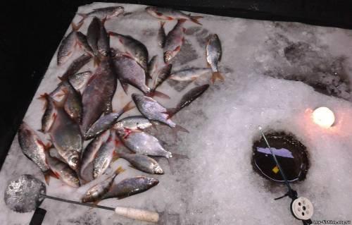 Отчеты о рыбалке в верхсысерти