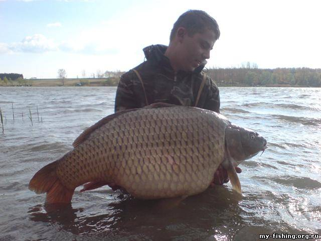 сколько стоит прикормка для рыбалки