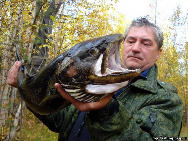 фото трофеев рыболовов