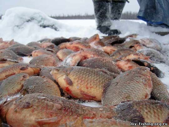 прогноз клева рыбы в якутске