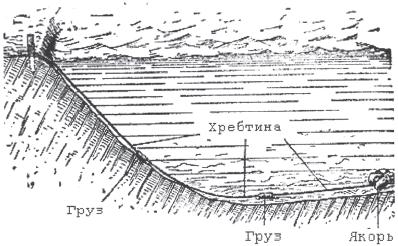 Хребтина