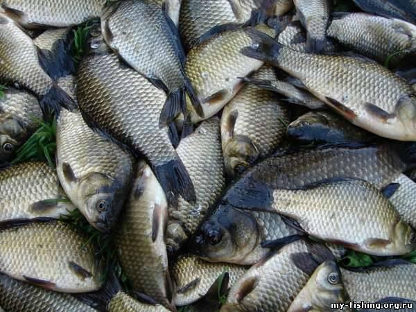 сколько стоит прикормка рыбалки