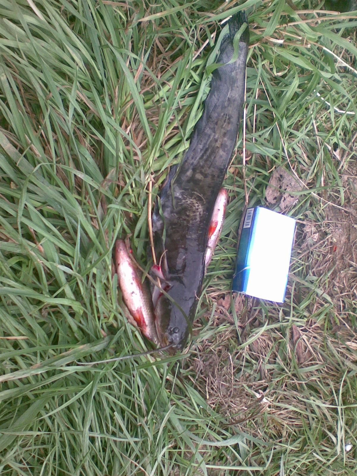 Рыбалка на реке Ржевка